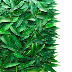 Eukaliptusz jótékony hatásai