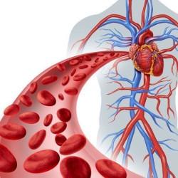 Masszázs hatása a vér- és nyirokkeringésre